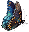 monica_butterfly_small